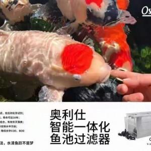 怎么样选择一款合适的锦鲤鱼池过滤设备?_图片